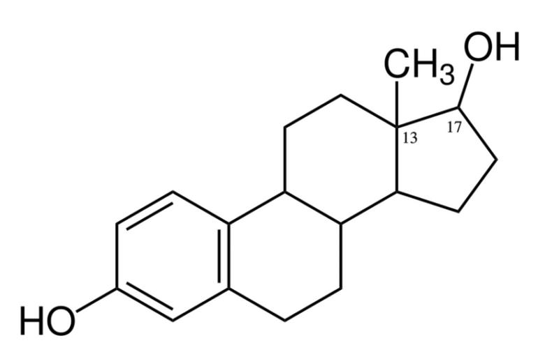 estrogen - estrogen