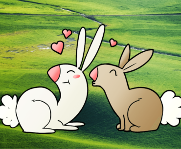 lets talk rabbits